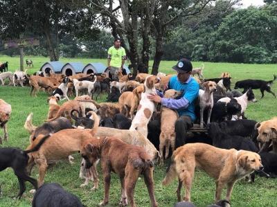 """探访哥斯达黎加""""犬之岛"""" 上千流浪狗聚居于此"""